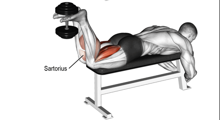 dumbell leg curl alternatives