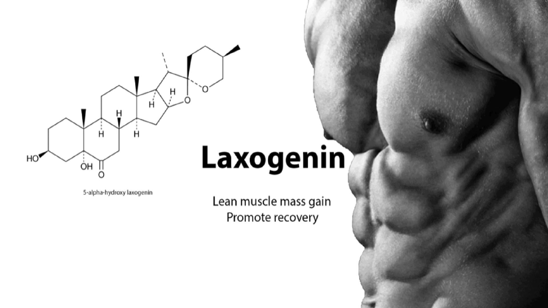 laxogenin supplement